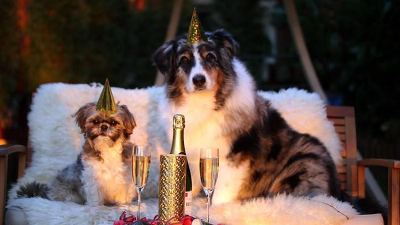 single urlaub mit hund silvester 2021