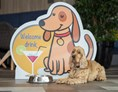Urlaub-mit-Hund: Welcome Drink - Gotthard Therme Hotel & Conference****