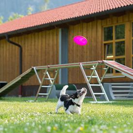 Hundeschwimmbad Bayern
