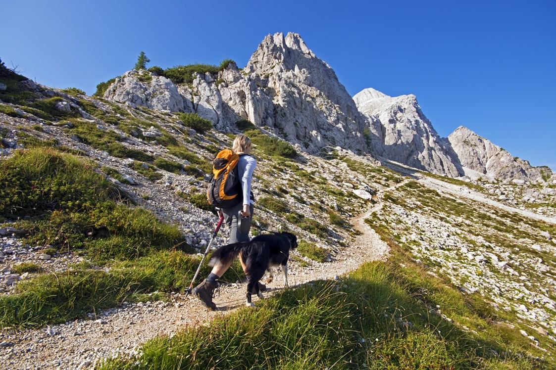 ▷ Reise Angebote für Single Urlaub mit Hund   Ferien mit Hund