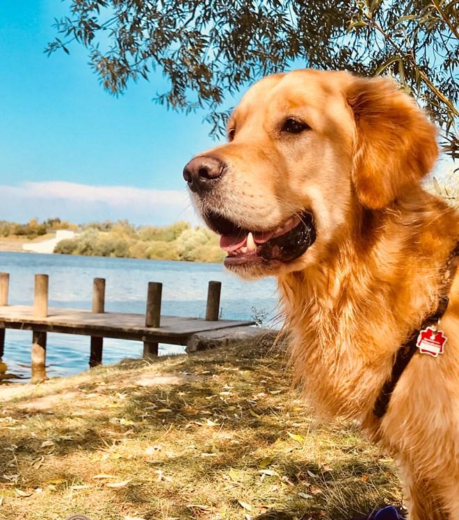 Landhotel Haus Waldeck: Hotel Für Den Urlaub Mit Hund In Postmünster