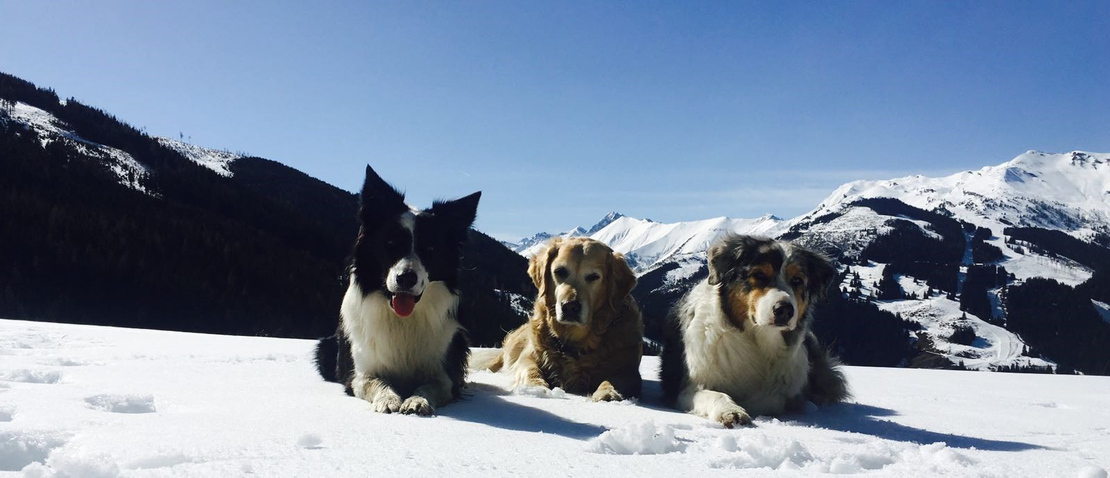 Urlaub-mit-Hund: Winterkulisse in Rauris - Hotel Grimming Dogs & Friends