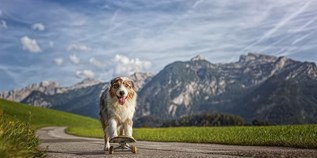 Hundehotel - Hohe Tauern - Hotel Grimming Dogs & Friends