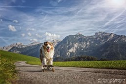 Urlaub-mit-Hund - Hotel Grimming Dogs & Friends
