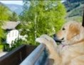 Urlaub-mit-Hund: Hotel Grimming Dogs & Friends
